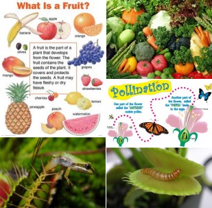 Collage Image of Plants & Gardening
