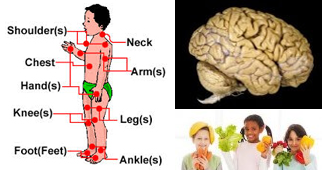 Collage image of Human Body