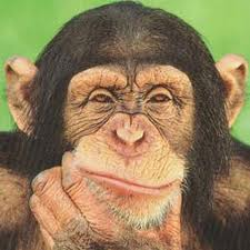 Chimpanzees – The Most intelligent Animals on Earth