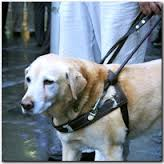 Guide and Service Dogs on a Leash Image - Science for Kids All About Guide and Service Dogs