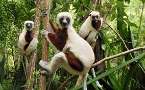 Lemurs and Monkeys