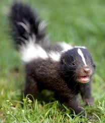 Fun Skunks Quiz – FREE Interactive Science Quiz Questions for Kids