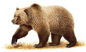 Fun Brown Bears Quiz – Easy Science FREE General Knowledge Quiz with Answers