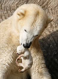 Mother Polar Bear with her Cub Image
