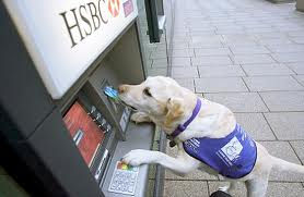 Service Dog Working an ATM Image