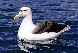 Fun Albatrosses Quiz – FREE Interactive General Knowledge Quiz for Kids
