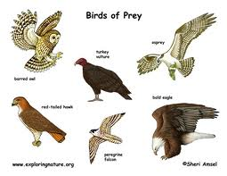 Birds Of Prey – Top 10 Science Kids Websites With Free Printables
