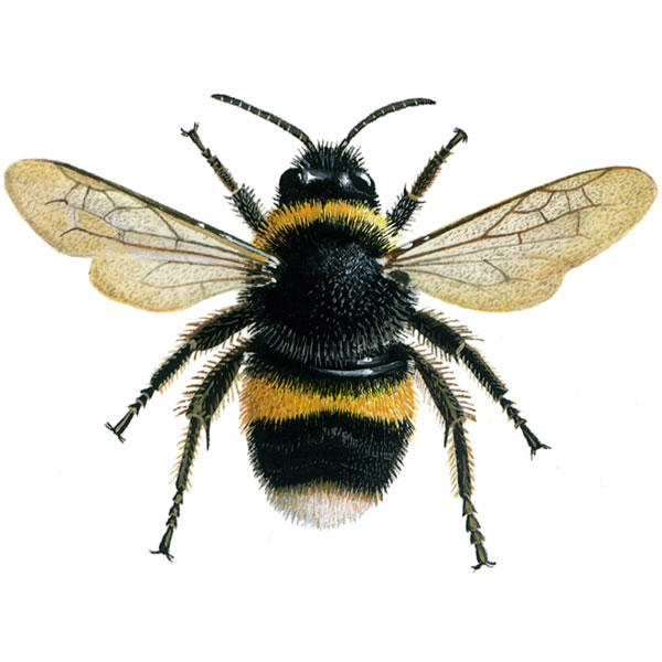 Fun Bumblebees Quiz – FREE Online Interactive Science Quiz