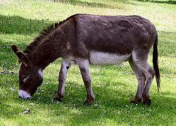 Fun Donkeys Quiz – FREE Interactive Kids Science Quizzes