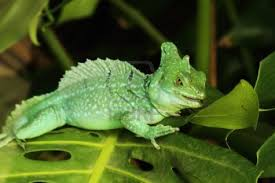 Green Basilisk Lizard – Lizards That Can Walk on Water