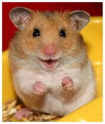 Smiling Hamster Image - Science for Kids All About Hamsters