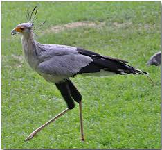 Fun Secretary Birds Quiz – FREE Interactive Online Quiz Games