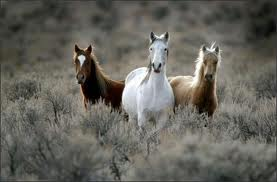 Fun Wild Horses Quiz – FREE Interactive General Quiz Questions for Kids