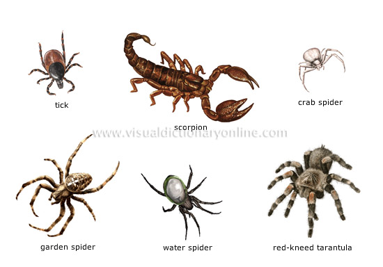 Arachnids and Their Family Members