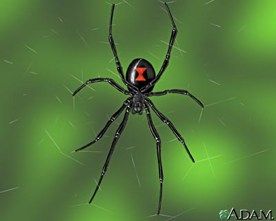 Fun Spiders Quiz – Online Interactive FREE Quiz for Kids on Spiders