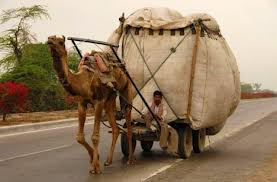 Camel Carrying Load Image