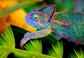 Chameleons – Free Easy Science Worksheets to Download