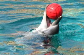 Dolphin Playing with a Rubber Ball Image