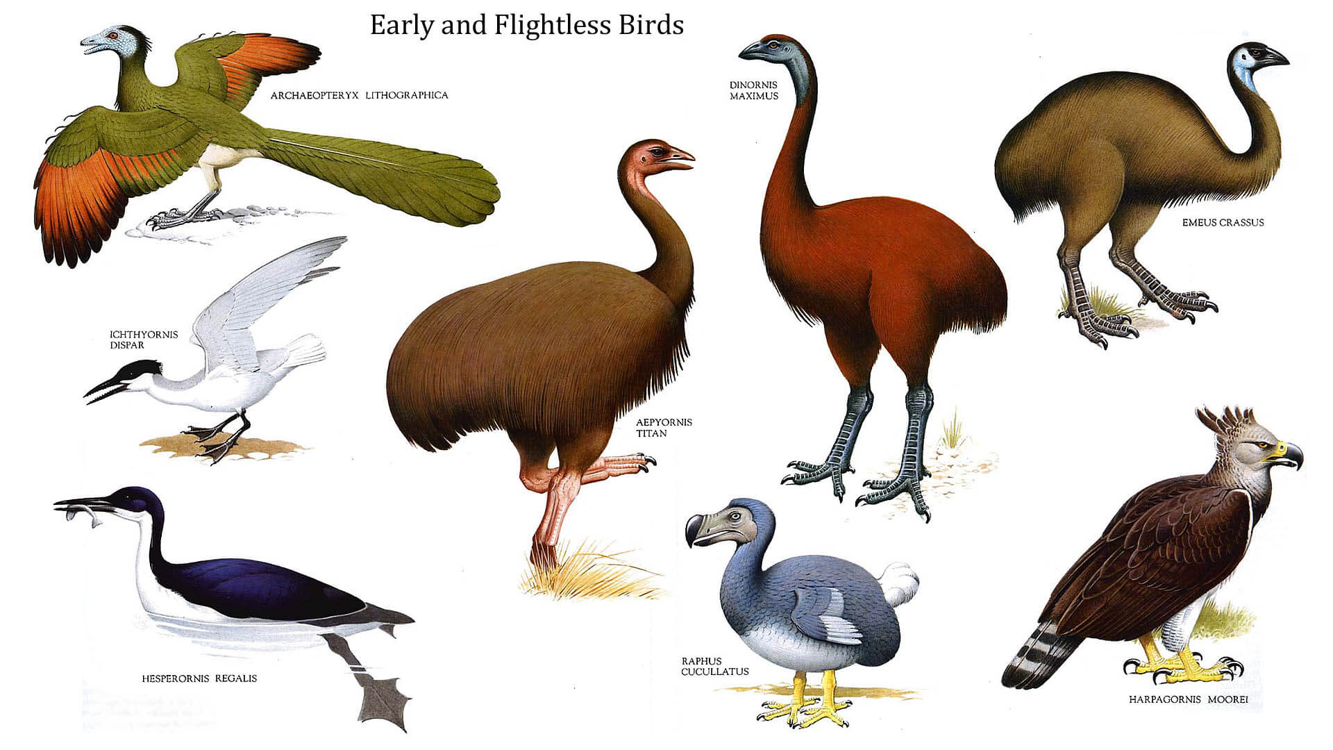 FREE Interactive Flightless Birds Quiz – Fun Quizzes for Kids