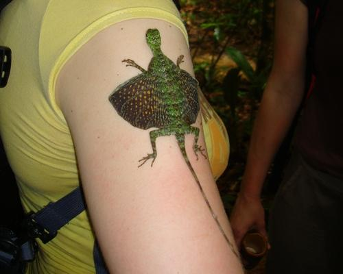 Flying Dragon On a Woman's Arm Image