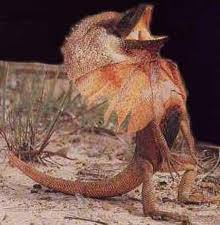 Frilled Lizards Worksheet – Free Science Worksheets for Kids
