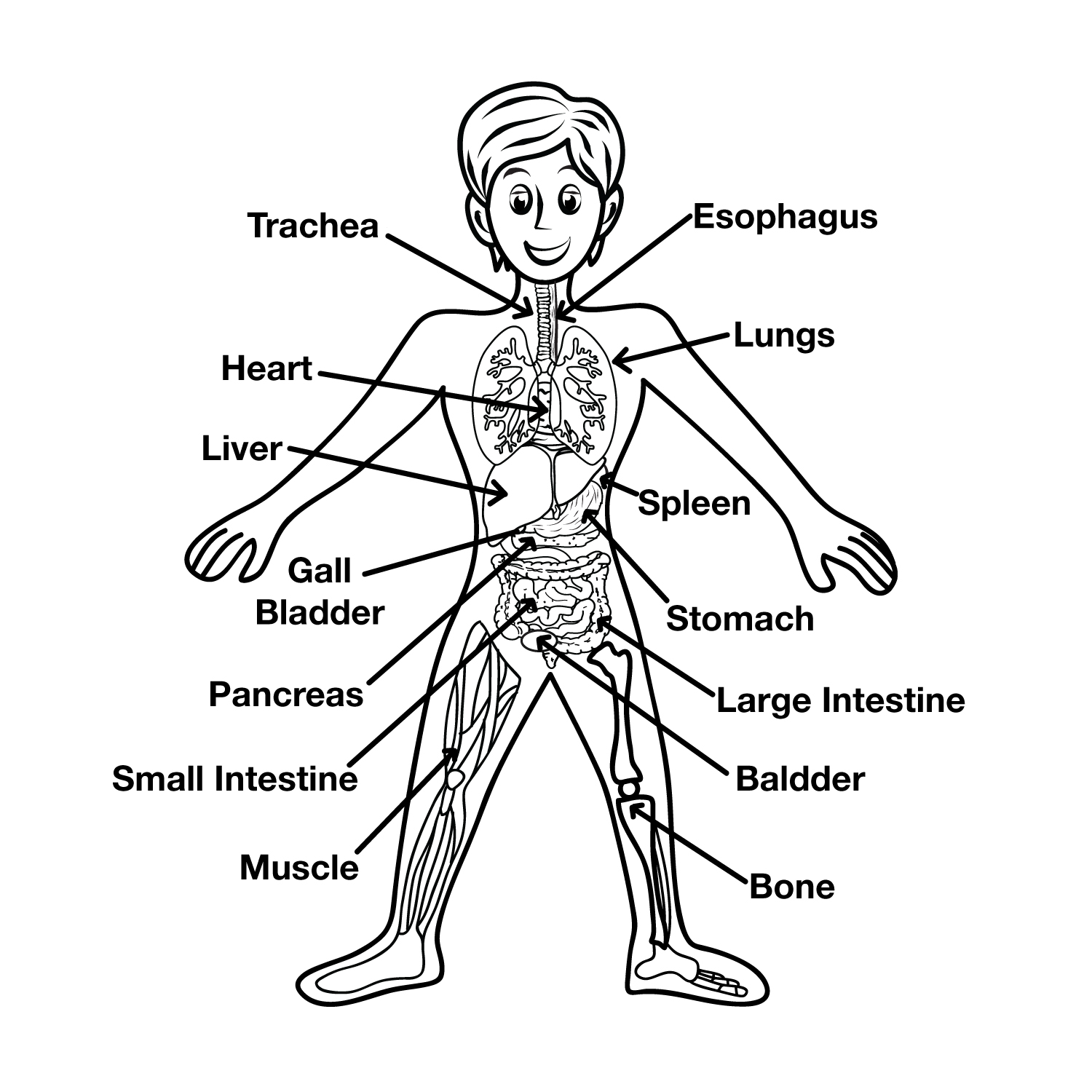 Fun Interactive Systems of the Body Quiz – FREE Quiz Games for Kids