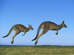 Kangaroos Jumping Image - Science for Kids All About Kangaroos