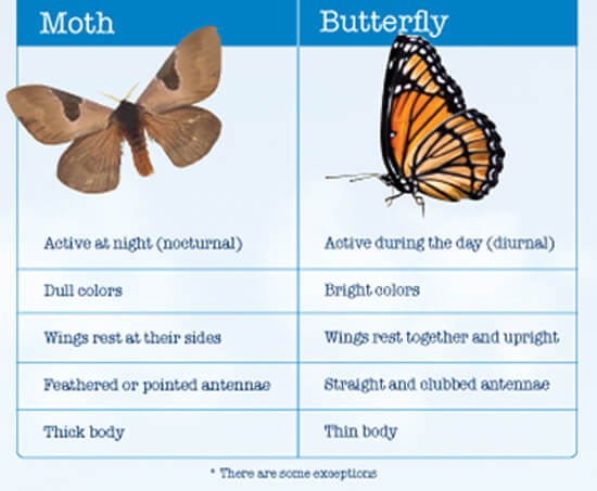 Butterflies and Moths – Free to Print Science Worksheet for Third Grade Kids