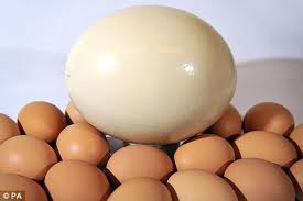 Ostrich Egg Compared to Chicken Eggs Image