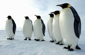Fun Penguins Quiz – FREE Interactive Science Kids Quiz Questions with Answers
