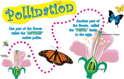 Fun Pollination Quiz – FREE Online Science Quizzes for Children