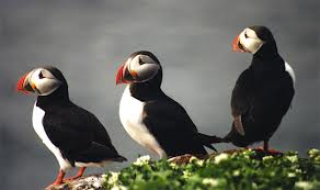 Fun Puffins Quiz – FREE Interactive Easy Quiz Questions for Kids