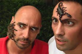 Scorpion and Spider on Human Faces Image