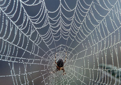 Spider on a Web Image