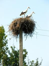 A Stork Nest on Top of a Post Image