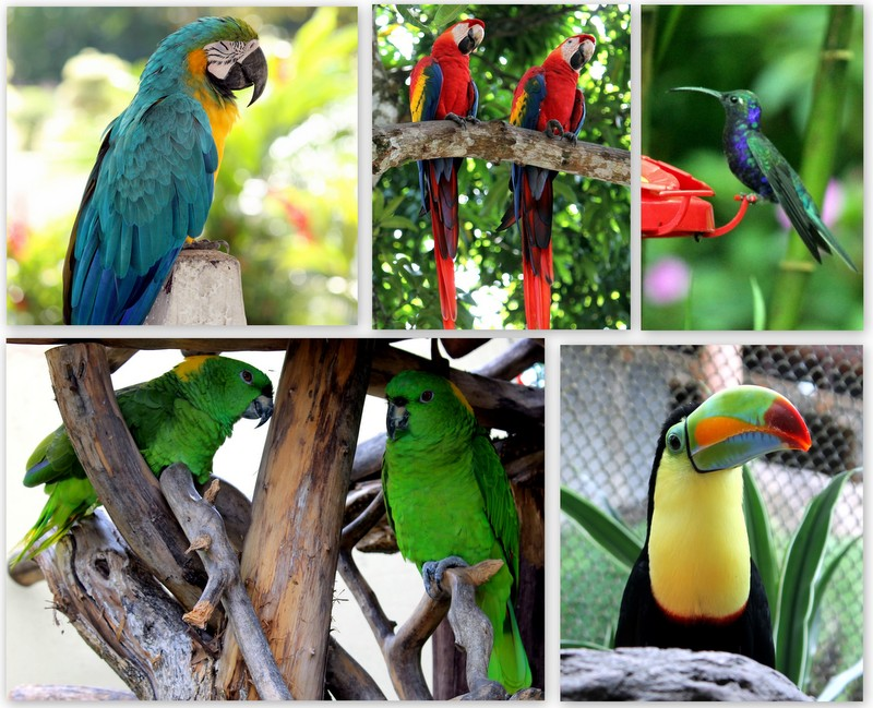 Fun Tropical and Exotic Birds Quiz – FREE Interactive General Science Quiz for Kids