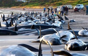Dead Whales Washed Up on Shore Image