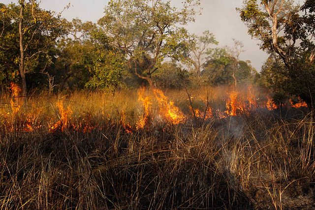 Fires are a normal event on grasslands and can lead to healthy regrowth