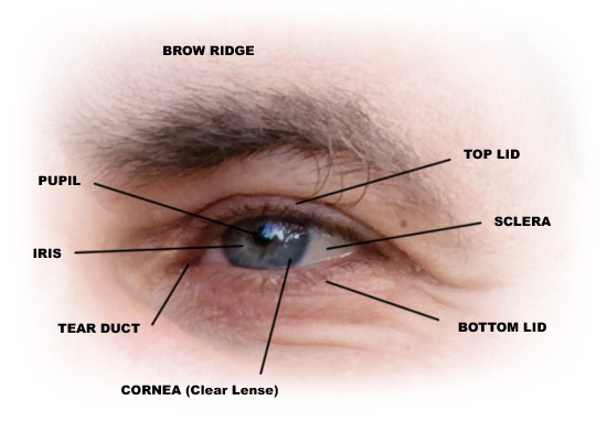 Parts of the Eye Image