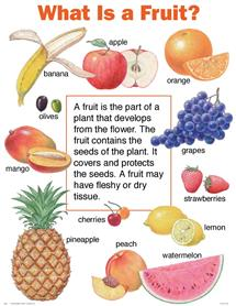 Explanation about fruits Image - Science for Kids What is a Fruit