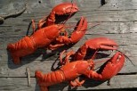 Crustaceans, Lobsters, Crabs and More