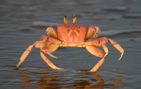 Fun Crustaceans Quiz – FREE General Knowledge Quiz for Kids Online
