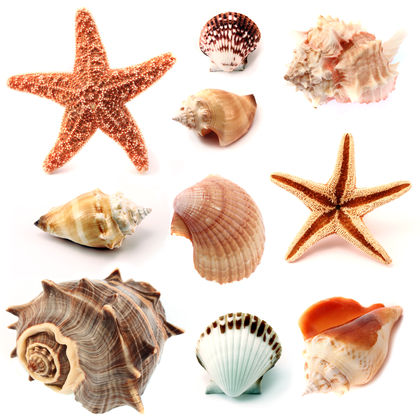 Fun Mollusks Quiz – FREE Online Interactive Science Quiz