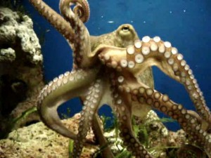 Octopus Spreading its Tentacles Image