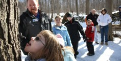 All about New England Fun Geography Facts for Kids - Kids Tapping the Tree for the Maple Syrup Festival