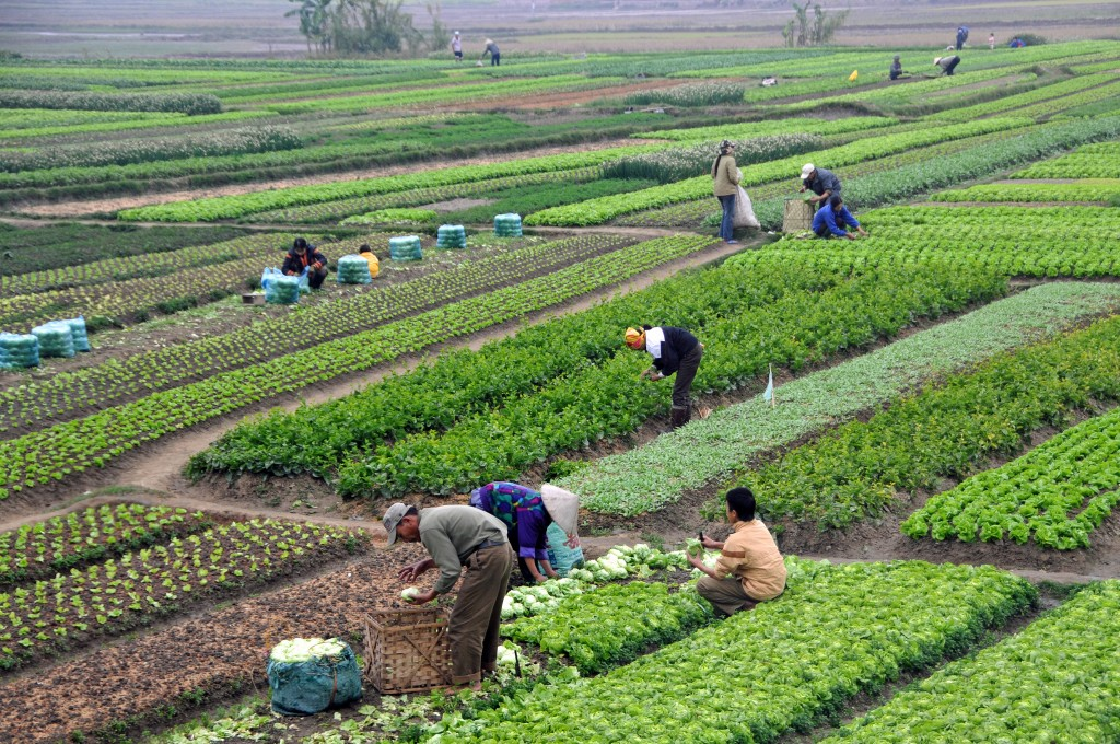 All about Vietnam for Kids - Image of Agricultural Farming in Vietnam