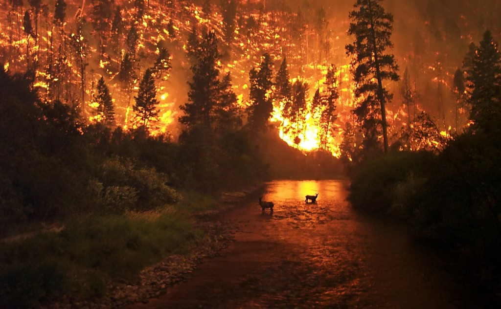 All about Wildfires Fun Earth Science Facts for Kids Image