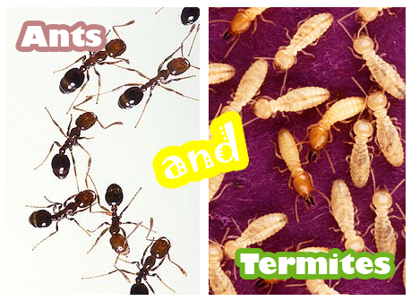Fun Ants and Termites Quiz – FREE Online Interactive Science Quiz