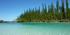 Easy Science Kids Facts about New Caledonia - Image of the Araucaria Columnaris in New Caledonia