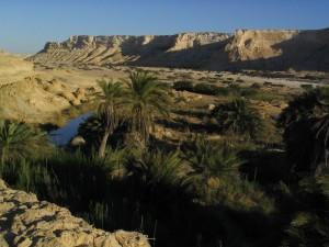 Easy Science Kids Facts about Oman country details - Image of an Oasis in Oman